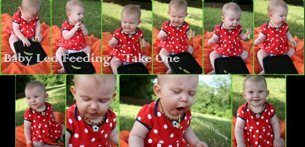 Baby Led Feeding – A Sensory Adventure
