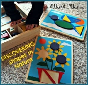 discovering shapes in nature