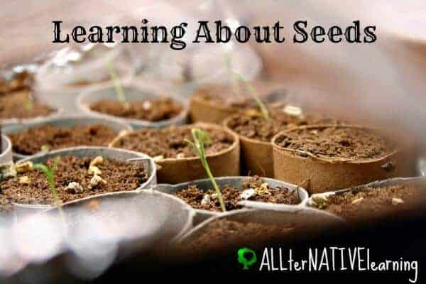 Seed Sprouts | Learning About Seeds in Tot School