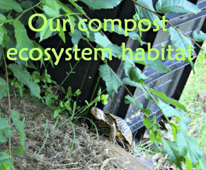 Turtle Living at the Composter