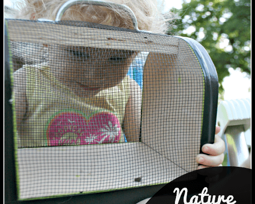 Catching bugs in a bug box during Nature week of Tot School