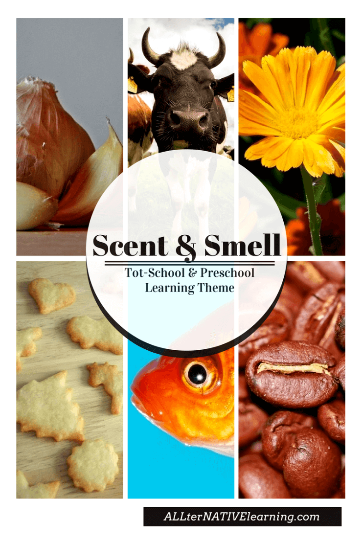Scent & Smell Learning Theme for Toddlers & Preschoolers | ALLterNATIVElearning