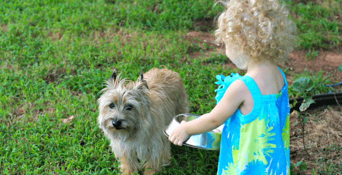 Toddler giving the dog water as part of chores