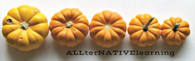 Montessori Inspired activity to sort mini pumpkins by Size | allternativelearning.com