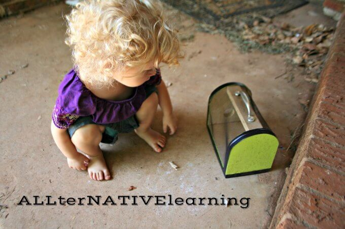Examining our bug collection after a hike and walk | ALLterNATIVElearning