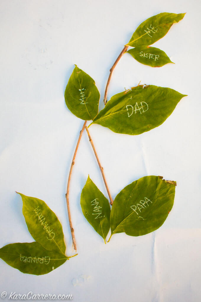 Stick and leaf family tree in elementary and preschool
