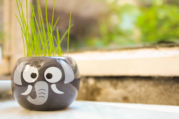 Elephant pot with chives - herbs to grow with kids