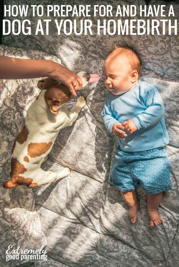 Can a dog be at a homebirth? Sure, but here's how to prepare your dog for a new baby and labor and delivery in the home.