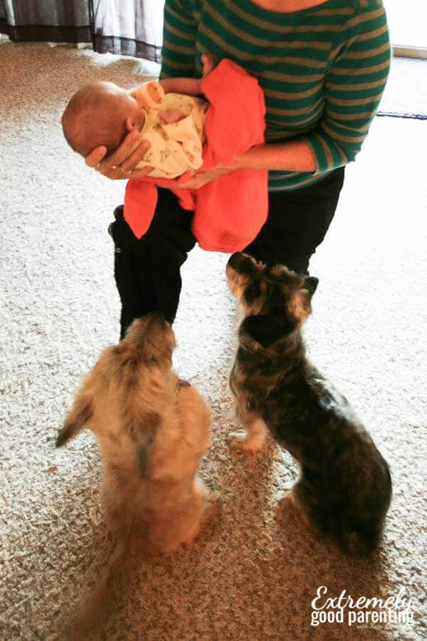 How to introduce a dog to a new baby and have them at a homebirth