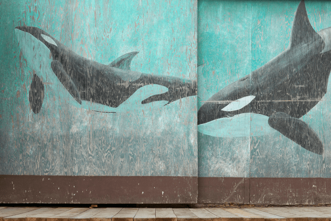 How to be a village? Learn to be vulnerable from a mourning Orca